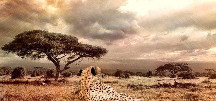 Bagaimana Amazon Boleh Jadi Selincah Cheetah